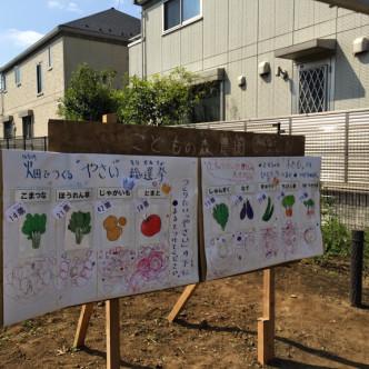 野菜総選挙
