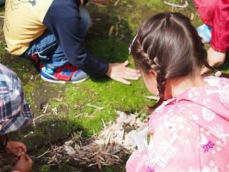 地面にみっしりとはえた苔を触る。